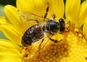Bees in Islam